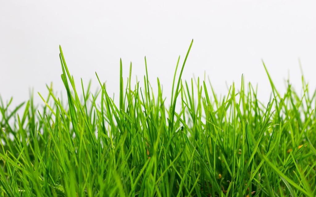 Broadway-Grass