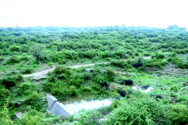 India8 alice walkers garden