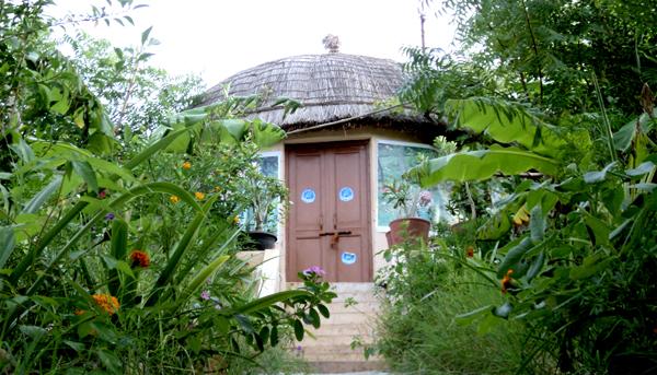 India9 alice walkers garden
