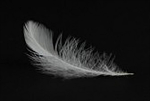 Alice Walkers poem Loadstar image of white feather against black background